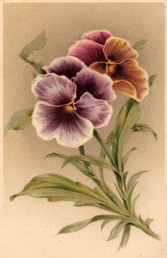 Pansy * Togetherness & Remembrance *