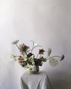wild blooms by @studiomondine
