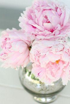 Pink poenies