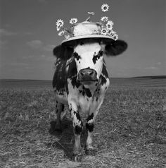 Oh La Vache! Meet Hermione, the Very Stylish Cow