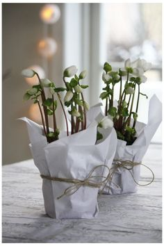 plants as centerpieces/favors cheaper than cut flowers and you can pick them up days/weeks in advance of the big event Christmas Flowers, Noel Christmas, White Christmas, Christmas Decorations, Table Decorations, Simple Christmas, Beautiful Christmas, Cut Flowers, White Flowers