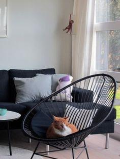 chat et fauteuil acapulco