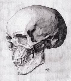 Skull Three Quarter Reverse (Critique)