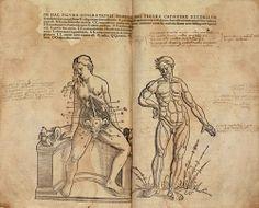 Kaspar Bauhin (https://www.pinterest.com/pin/287386019949818463) with Theodor de Bry (https://www.pinterest.com/pin/287386019949610405). Theatrum Anatomicum, 1605 (https://pinterest.com/pin/287386019949874427).