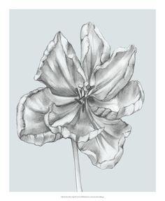 Silvery Blue Tulips Print