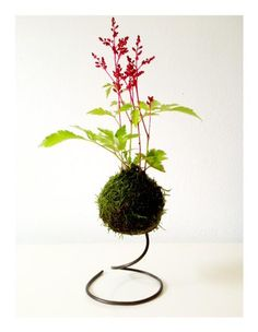 Unique bonsai kokedama Ball Ideas for Hanging Garden Plants selber machen ball Succulent Display, Hanging Succulents, Succulent Terrarium, Hanging Plants, Air Plants, Garden Plants, Indoor Plants, House Plants, Indoor Flowers