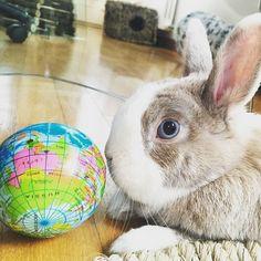 Bunny Geography  Hey buns! Where shall I go on vacation?! ❤Tiffo Follow Tiffo on Instagram @tiffoco