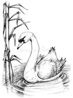 Illustration about Swan on lake, cattail sketch. Illustration of graceful, graphic, ripple - 70460175 Nature Sketches Pencil, Abstract Pencil Drawings, Animal Sketches, Bird Drawings, Animal Drawings, Drawing Sketches, Swan Drawing, Folk Art Flowers, Bird Sketch