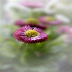 Blütenromantik Bilder: Poster von Emotion-Art bei Posterlounge.de