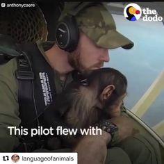 #Repost @languageofanimals ・・・ #Repost @anthonycaere @thedodo ・・・ Great teamwork of @lwirocrpl and Virunga National Park to save this baby…