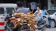 """President of Vietnam, Trương Tấn Sang and Prime Minister Nguyễn Tấn Dũng     Please Pay ATTENTION!!!     As the world celebrates Christmas and its happy message of peace and joy, remember that in Vietnam this is the peak time for killing (10,000) dogs and cats daily in the dog meat trade. Vietnam is one of the cruellest animal places on the planet, so please take a moment to remember the suffering that is taking place in Vietnam, because of this """"Merry Christmas"""" religious celebration…"""