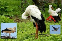 23 Bird, Animals, Animales, Animaux, Birds, Animal, Animais