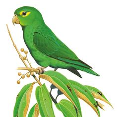 Fantasy Places, Bird Illustration, Bird Drawings, Watercolor Bird, Color Of Life, Bird Prints, Bird Art, Beautiful Birds, Parrot