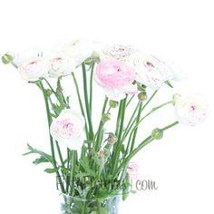Ranunculus Flower Bridal Blush | FiftyFlowers.com 50 stems = $129 100 stems = $169 200 stems = $229