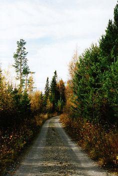 tearingdowndoors:  Autumn at the Mökki III ||Polly Bird Balitro