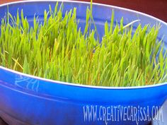 "A little ""how-to"" that would work for those awesome grass centerpieces."