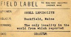 Shell Lepiodolite #mineral #label