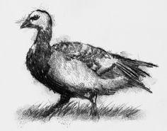 Artist Sean Briggs producing a sketch a day 6 Goose ##art#drawing#goose#sketchhttp://etsy.me/1rARc0J