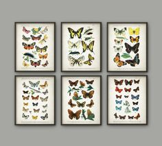 Antique Butterfly Art Print Set of 6 - Butterfly Decor - Lepidopterist Gift Idea - Butterflies Print - Butterfly Book Plate - AB670 by QuantumPrints on Etsy https://www.etsy.com/uk/listing/466559876/antique-butterfly-art-print-set-of-6