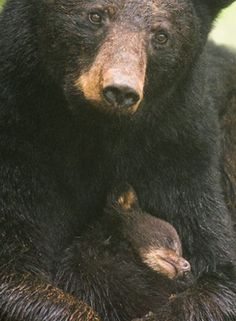 Mommy Bear with cub!
