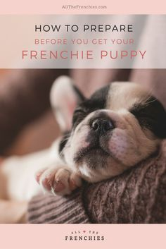 How to Prepare Before You Get Your Frenchie Puppy | All The Frenchies