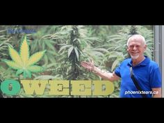 Rick Simpson: Cannabis Hemp Solutions to Human Problems | Patients for Medical Cannabis