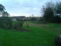 Felkington Garden with leylandii removed from in front of wall
