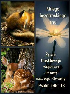 Psalm 145, Animals, Bible, Animales, Animaux, Animal, Animais