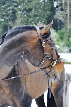 Horse Stables, Horse Tack, Horse Photos, Horse Pictures, Horse Girl, Horse Love, Horse Harness, Horse Armor, Leather Halter