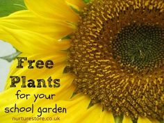 Free plants for your school garden from NurtureStore.   Fabulous ideas on activities and lessons to teach outside! Outdoor classroom. So many possibilities. Pin read later