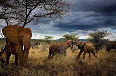 Virtues family, Samburu National Reserve, Kenya, 2007