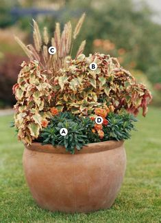 This container garden idea is all about capitalizing on a color theme to look cohesive. Terra-cotta hues echo through the pot, flowers, and foliage. #fallcontainergarden #containergardenplans #fallgardening #flowerpots #bhg Fall Container Plants, Fall Containers, Container Flowers, Container Gardening, Succulent Containers, Urban Gardening, Flowering Kale, Ornamental Cabbage, Gardens