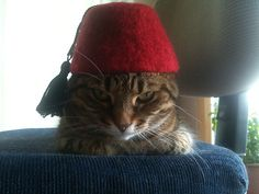 International Cat Hat - Turkey