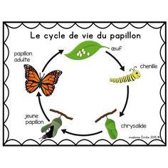 Cycle de vie Papillon Plus