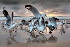#seagulls