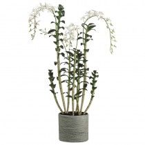 Gorst Orchids available at http://www.seniorfurnishings.com/