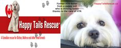 Please vote for this entry in Vetericyn Loves Animals Charity Giveaway-Small Animal! Animal Rescue, The Fosters, Charity, Giveaway, Animals, Animales, Animaux, Animal, Animais