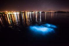 Luminous Lagoon, Jamaica http://mochilabrasil.uol.com.br/blog/os-destinos-bioluminescentes-do-mundo