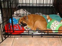 Crate training can help keep your dog with their separation anxiety