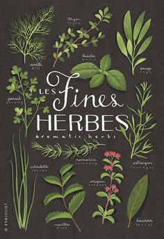 Les Herbes Aromatique…Styling your wedding with fresh herbs