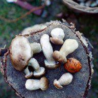 Sosy | Kwestia Smaku Sunny Days, Crisp, Stuffed Mushrooms, Vegetables, Recipes, Food, Autumn, Eat, Stuff Mushrooms