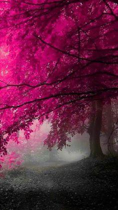 ⇜❊↠  trees