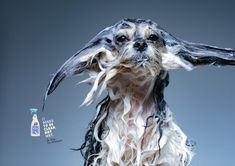 Print advertisement created by Propeg, Brazil for Dr. Dog, within the category: Pets. Dog Treat Packaging, Ad Of The World, Advertising Agency, Dry Shampoo, Print Ads, Dog Treats, Asian Art, Digital Marketing, Lion Sculpture