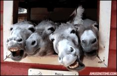 gif horse images | funny-horses-gif.gif