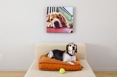 Pet Photos // Pet portraits on canvas really POP on the wall, plus it's fun to see if Fido recognizes himself. :)  // www.canvaspop.com