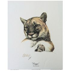 Print - Cougar by Guy Coheleach