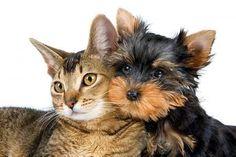 Allergia agli animali domestici cani gatti sintomi rimedi cure prevenzione cosa fare problemi complicanze consigli soggetti allergici vaccino