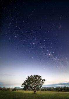Tree and Stars variation