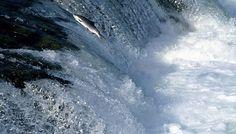 Mi Universar: Iré contra la corriente (Décimas para mi muerte II...