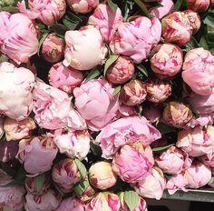 Pink peonies ♥️